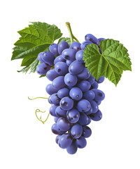 Vertical bunch of blue grapes isolated on white background