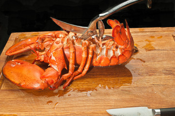 Close up, of front view, steamed lobster, cutting thoracic cavity shell with kitchen shears  in pool of chilled water on  a wood cutting board kitchen shears with black background