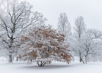 An idyllic winter scene after a heavy snowfall cloaks the landscape in a blanket of white.
