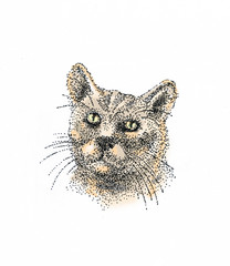 Кот смотрит на вас.The cat looks at you.
