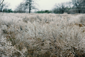 Icy frost covered grass in field landscape during winter.