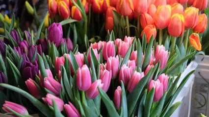Beautiful Famers Market Tulips In Bloom