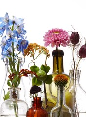 Flowers in glass bottles on white background