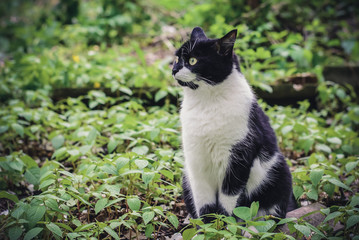 Black and white cat sitting in the garden