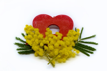 Mimosa and Heart