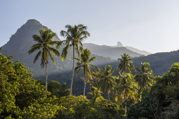Coconut palm trees in tropical Ilha Grande, Rio de Janeiro, Brazil