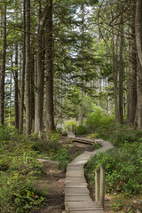 Wooden boardwalk in forest, Cape Flattery, Washington State, USA