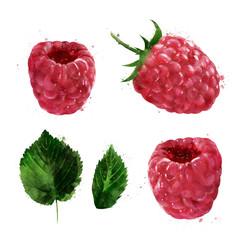Raspberries on white background. Watercolor illustration
