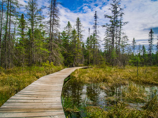 Pathway in Algonquin Park, Canada