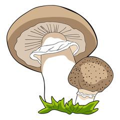 the is nature mushrooms champignons. illustration