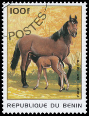 Stamp printed in Benin showing horse with filly