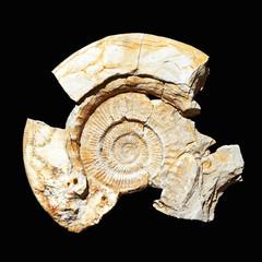 Ammoniten auf einer Steinplatte,  Fundstück aus dem Steinbruch