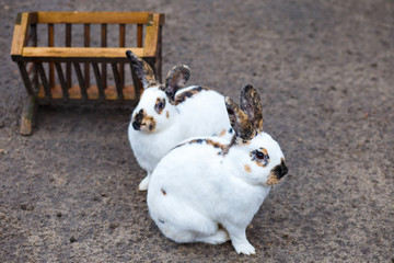 white decorative rabbits