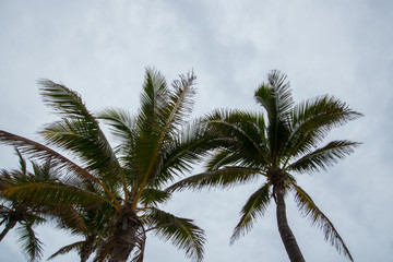 Palm tree fronds background