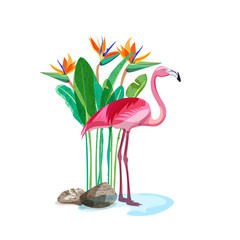Tropical pink flamingo bird stands in water and strelitzia exotic flowers and green leaves on backdrop. Vector hand drawn illustration, design elements isolated on white background.