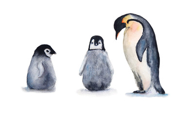 watercolor penguin set. isolated white background.