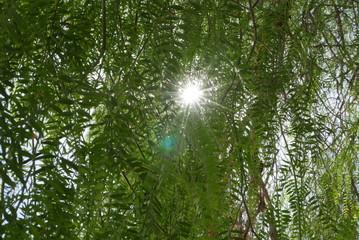 Sonnenstrahlen durch Laubbaum