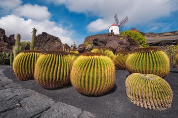 Beautiful tropical cactus garden in Guatiza, Lanzarote, Canary islands, Spain.