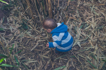 Cute little boy exploring nature