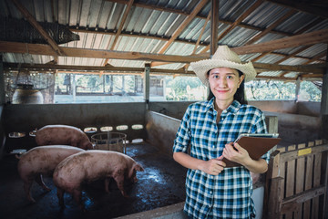 Veterinarian working on check and manage at agriculture farm ;woman inspecting pork plant and inspecting pig.