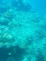 Barrier Reef, Cairns