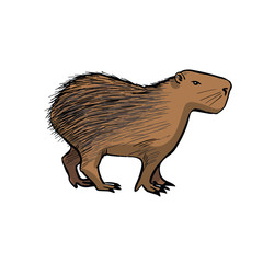 Capybara . Hand drawing sketch on white background.