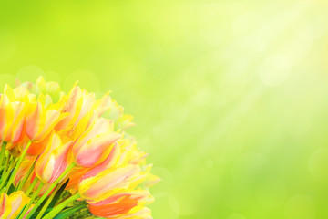 White, yellow, pink beautiful tulips in spring time with sun rays and bokeh. Light green on background. Fresh spring composition for holiday cards, banners, web design.