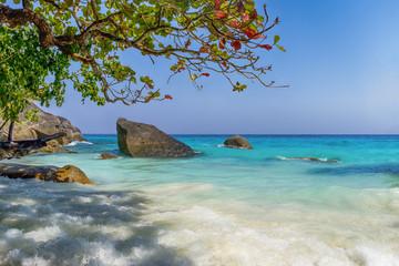 playa de agua turquesa y cielo con un árbol y piedras