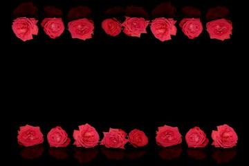 красивая натуральная розовая роза на черном фоне