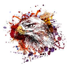 Vector color illustration of an eagle head