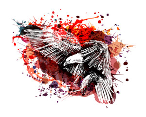 Vector color illustration of a flying eagle