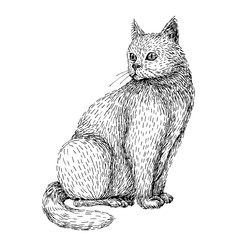 Hand drawn illustration of cat. Line art sketch style of sitting white cat. Black and white image.