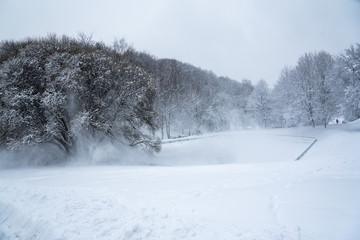 Kolomenskoye Park, winter landscape trees in snow