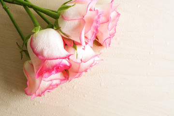 pink roses background abstraction