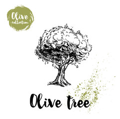 Olive tree hand drawn poster. Old looking vector artwork. Great for cosmetic creams designs, labels, flyers, farm fresh products.