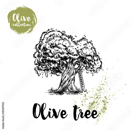 Olive Tree With Ladder Hand Drawn Poster Old Looking Vector Artwork