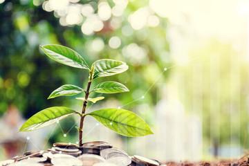 Growing saving money concept