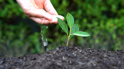 Fototapete - Slow motion shot of woman hand giving water to a plant sprout. Concept of green environment caring, global warming protection, tree plantation and agriculture.