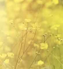 Wall Mural - Delicate Spring Flowers