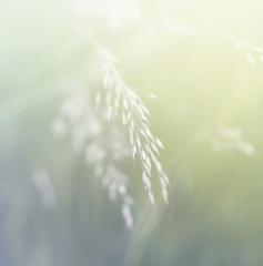 Wall Mural - Grass. Fresh green spring grass. Soft Focus. Abstract Nature Background