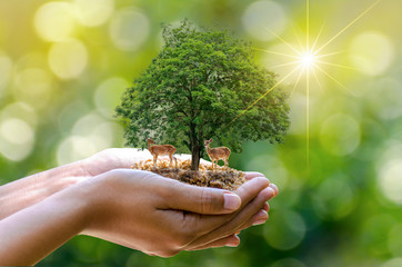 tree in the hands of trees growing seedlings. Bokeh green Background Female hand holding tree on nature field grass Forest conservation concept Two deer standing under a tree with sunlight.