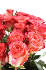 Close-up of a beautiful bouquet of pink roses. Isolated