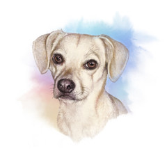Portrait of a Dog. Cute puppy on the watercolor background. Watercolor Animal collection: Dogs. Dog Pug Portrait - Hand Painted Illustration of Pet. Good for banner, T-shirt, card. Art background