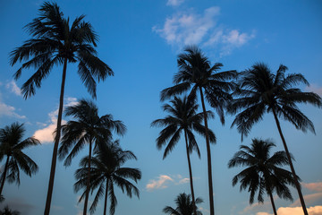 Silhouettes of palm trees on a blue sky background.