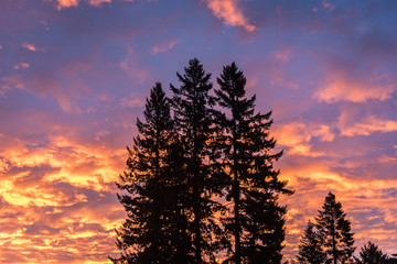 Silhouetted trees at sunrise