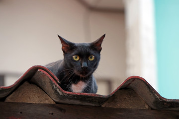 Black cat with yellow eyes on the roof. cat is a small domesticated carnivorous mammal with soft fur, a short snout, and retractile claws. It is widely kept as a pet or for catching mice.