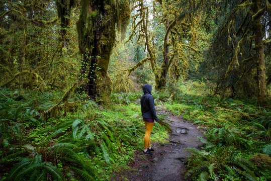 Hiker standing in the extremely lush green rain forest of the Olympic National Park
