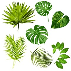 Tropical Leaves Vector Herbal ClipArt Digital art Set of 7 imagesTropical Leaves Vector Herbal ClipArt Digital art