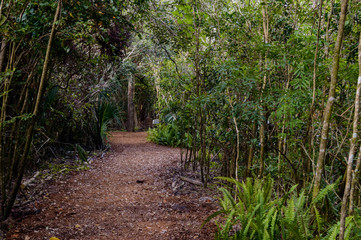 Florida park trail