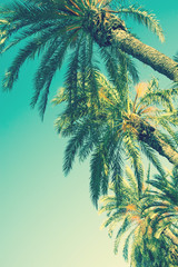 Looking up Perspective on Row of Palm Trees on Toned Light Turquoise Sky Background. 60s Vintage Style Copy Space for Text. Tropical Foliage. Seaside Ocean Beach Vacation. Hip Funky Vintage Toning